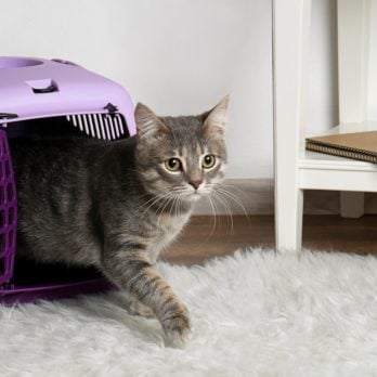 How to Get Your Cat in a Carrier—Without Getting Clawed