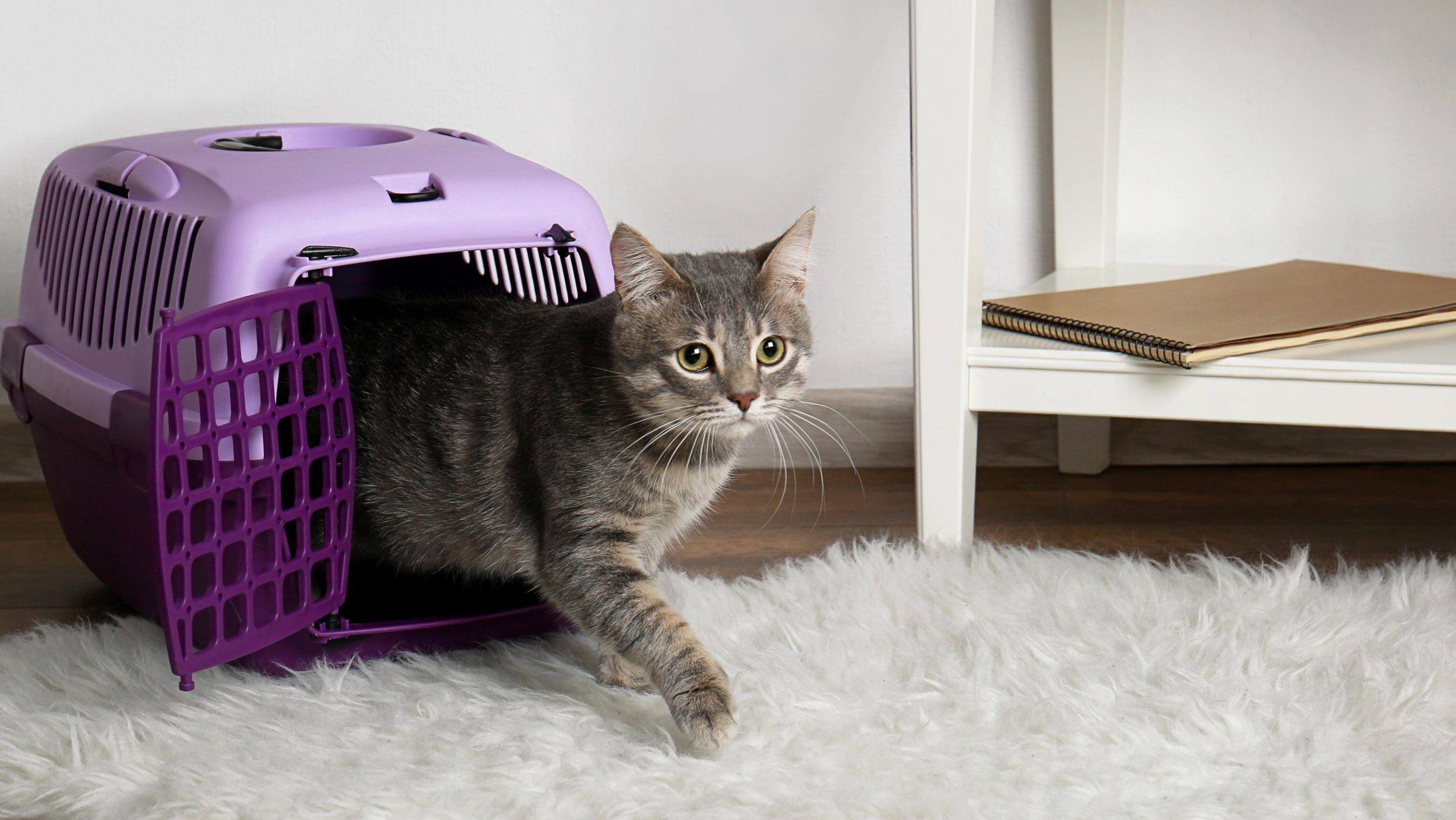 Cat in carrier box on floor at home