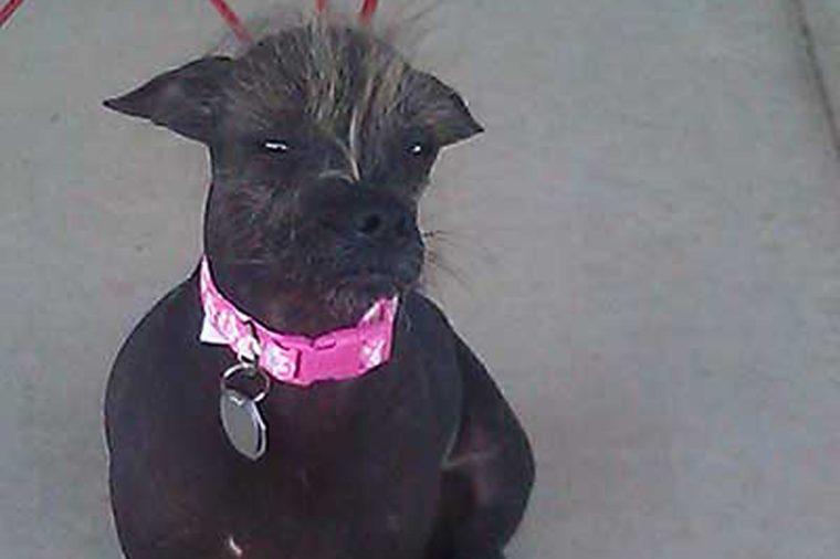 ugly dog cyndy loo whoo