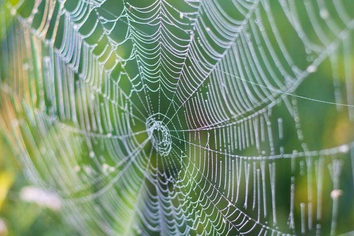 detail shot of spider web