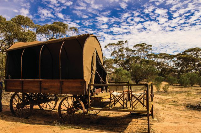 Swagon - Kangaluna Camp