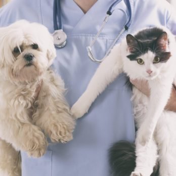13 Signs You Need to Switch Veterinarians