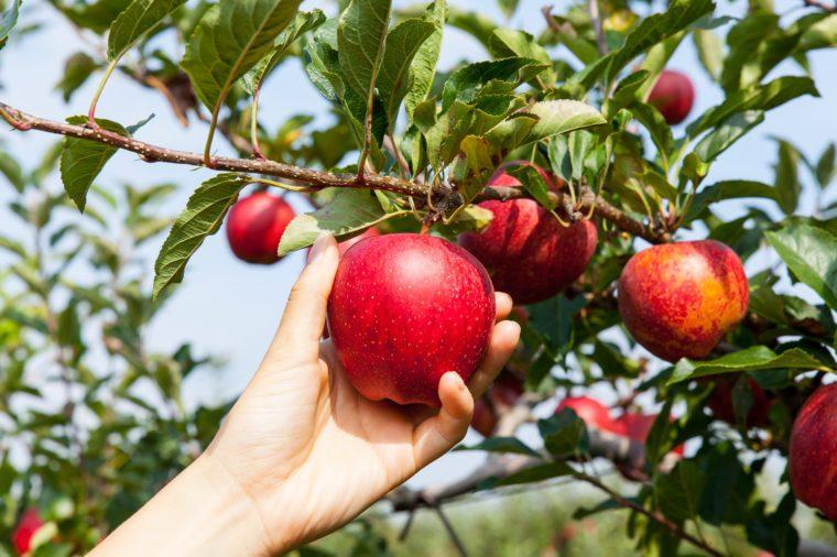 woman hand picking an apple