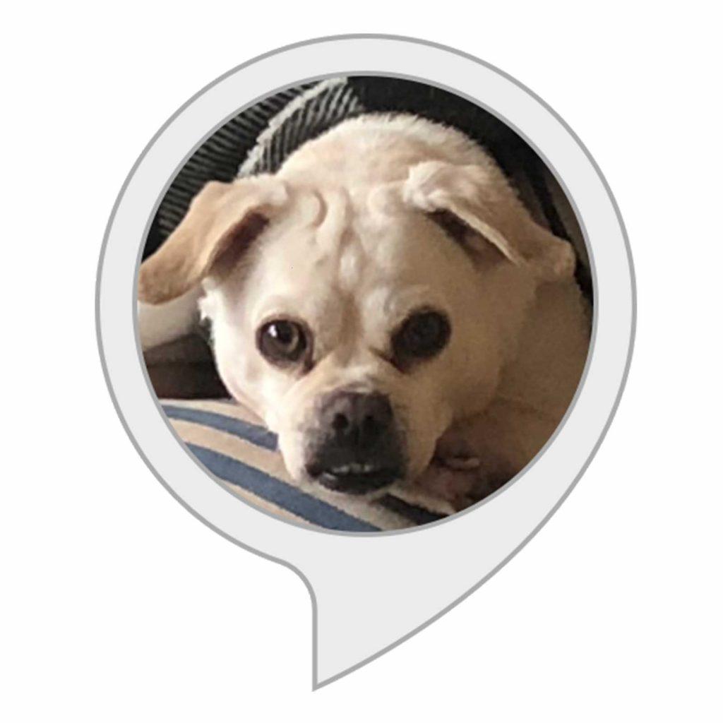 01-Dog-Breed-Quiz