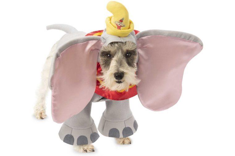 02_Dumbo