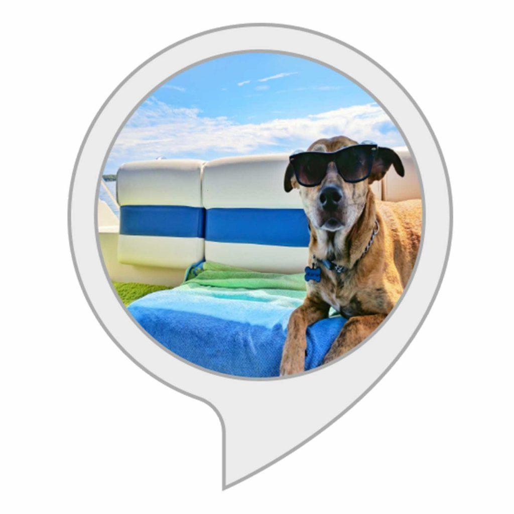 03-Dog-Summer-Safety-Tips