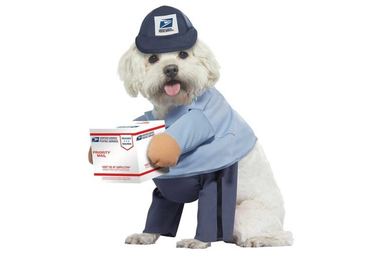 03_Delivery-dog