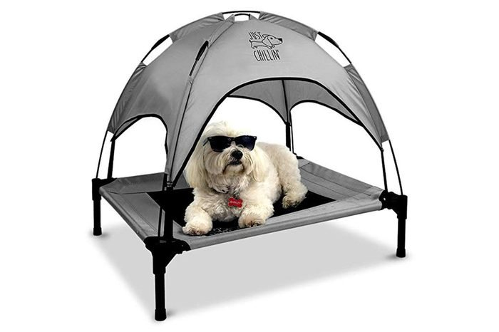 04_Shield-your-pet-with-shade