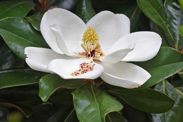 05_Oleander