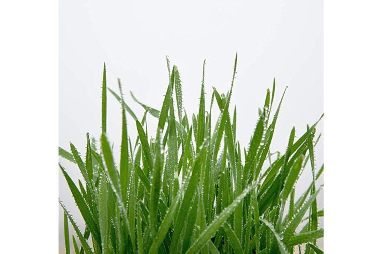 05_Plant-some-cat-friendly-herbs