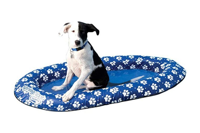 13_Provide-a-pool-float-for-Fido