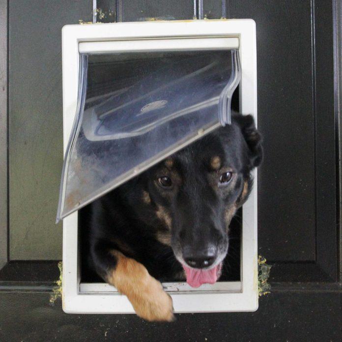 Pets-Doggie Door Thefts