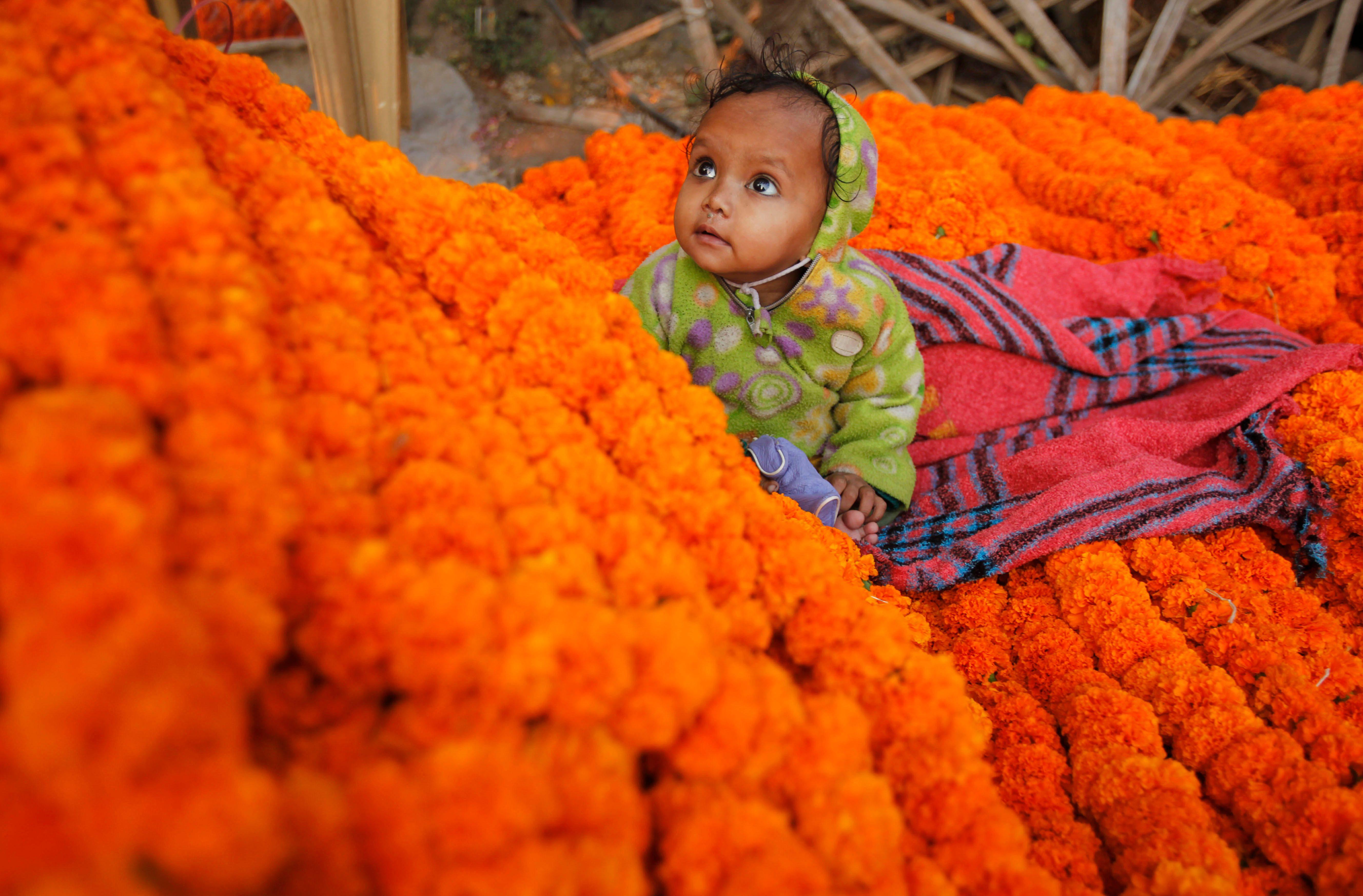 India Diwali, Allahabad, India