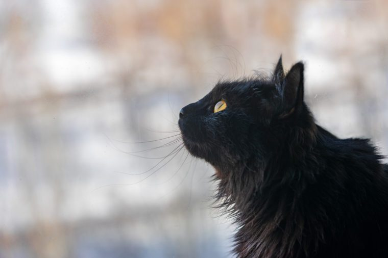A beautiful black cat sits at the window and looks at the birds.