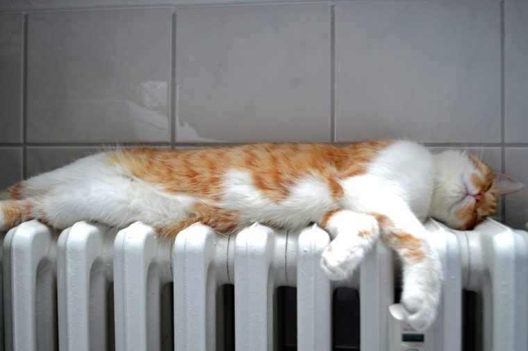 A beautiful red and white cat sleeping on a heater in the bathroom
