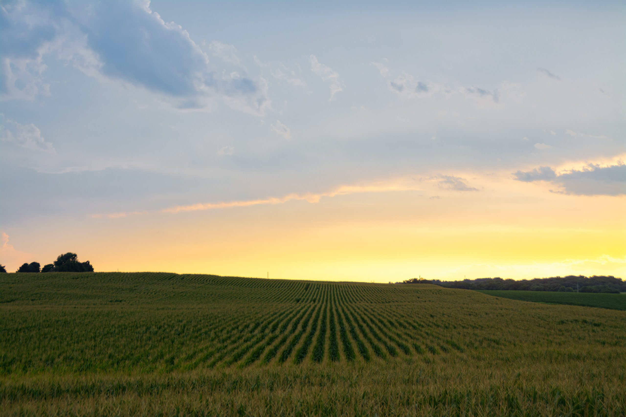 Afternoon light after a Summer rain over cornfield. Bureau County, Illinois, USA