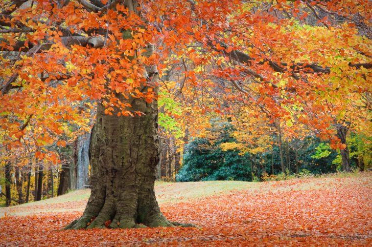 Autumn at Connecticut