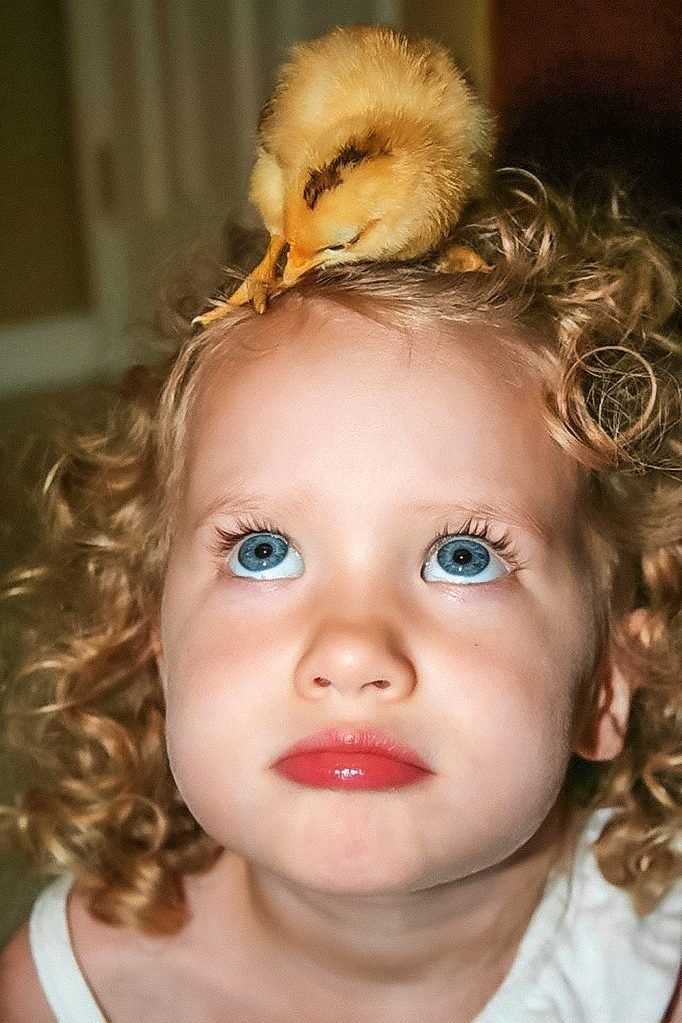 cute young girl looking up at the duckling on her head