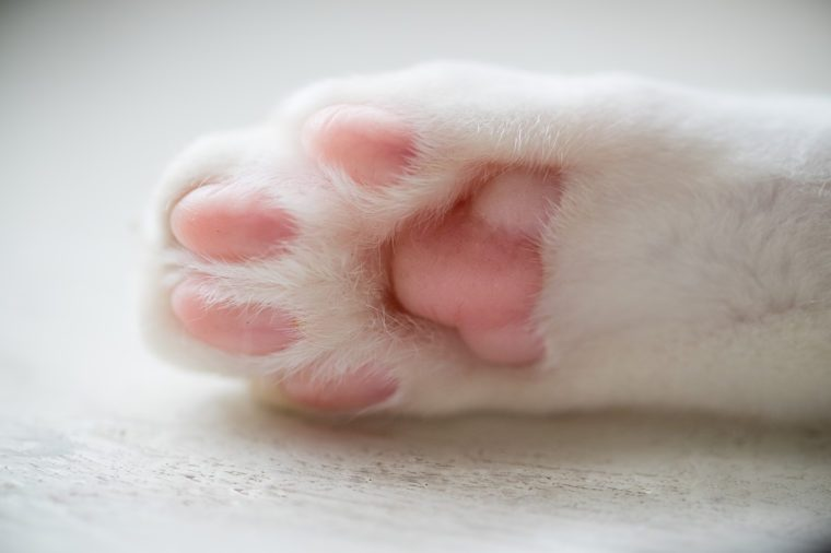 Closeup shot of the cat's paws