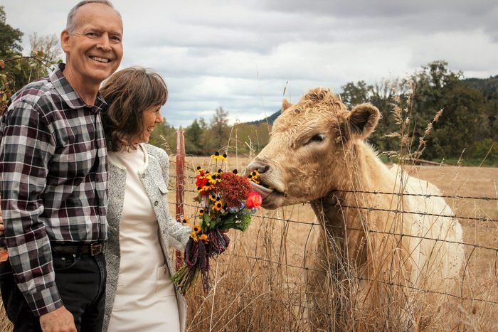 a couple stands near a cow; the cow sniffs the bouquet of flowers in the woman's hands