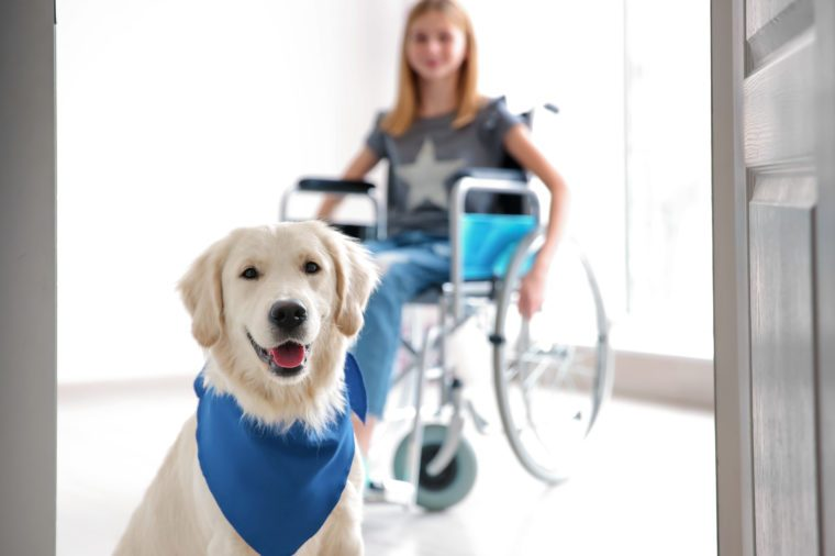 Cute service dog and blurred girl in wheelchair, view through door