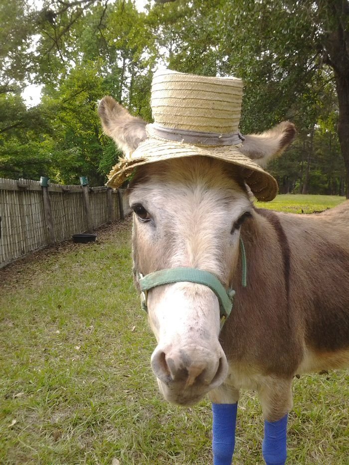 donkey in a straw hat