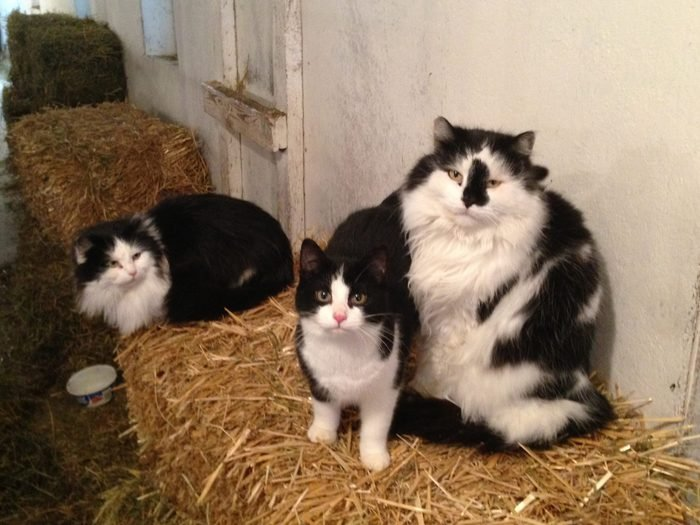 cats sitting on bales of hay