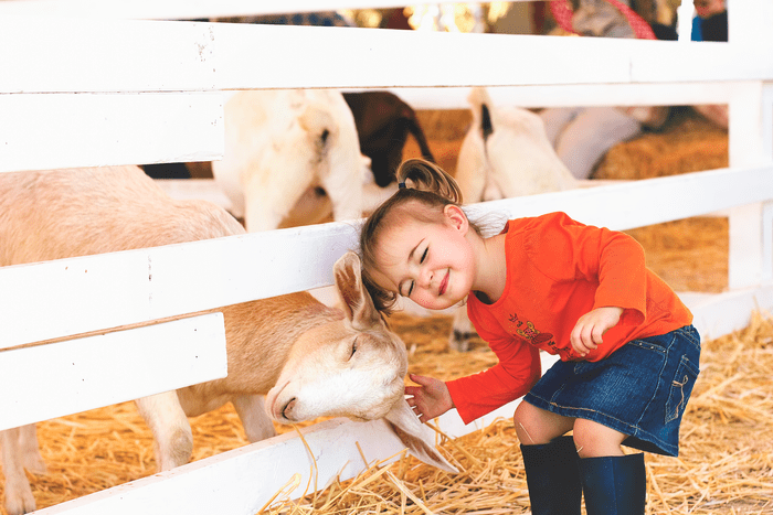 little girl bonding through the fence with a sheep
