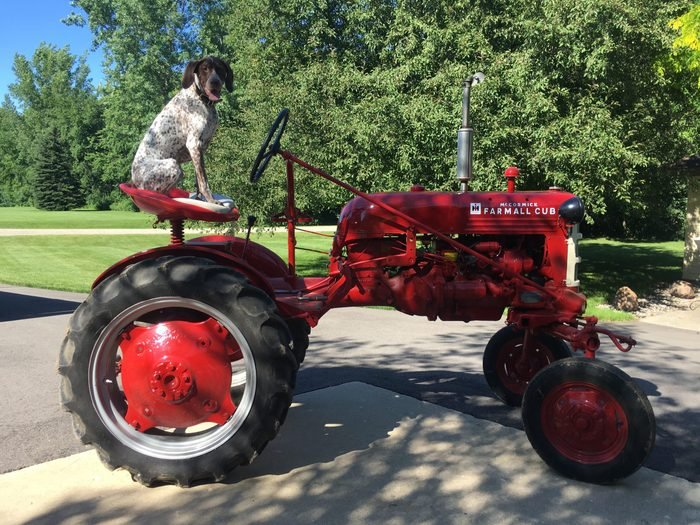 dog sits in the seat of a vintage farm tractor