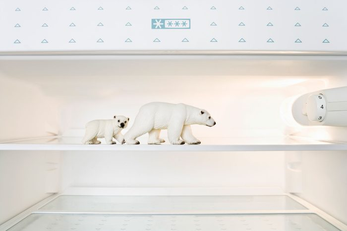 toy polar bears on a shelf in a freezer near temperature knob