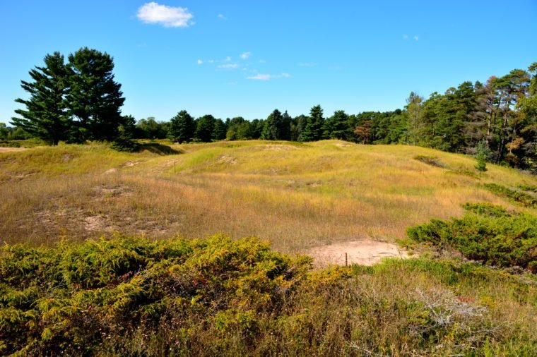 Large sand dunes with wild juniper spreading over the sands. This is a natural environment just off the shores of Lake Michigan near Wilson and Sheboygan Wisconsin with bright blue skies above.
