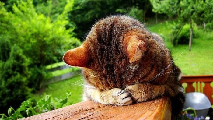 Sleeping funny cat