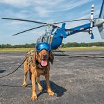 10 Real Jobs Your Dog Could Have