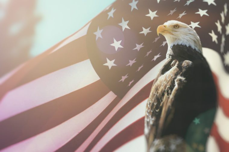 American Bald Eagle Flag Patriotism. Bald Eagle, symbol of American freedom, perched in front of an American flag. United States of America patriotic symbols.
