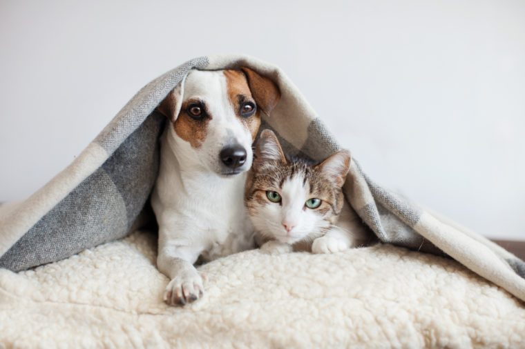 Dog and cat together. Dog hugs a cat under the rug at home. Friendship of pets