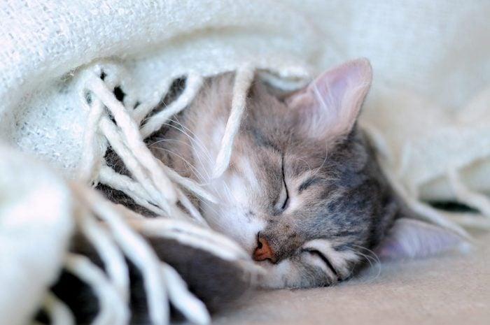 cat sleeping under blanket