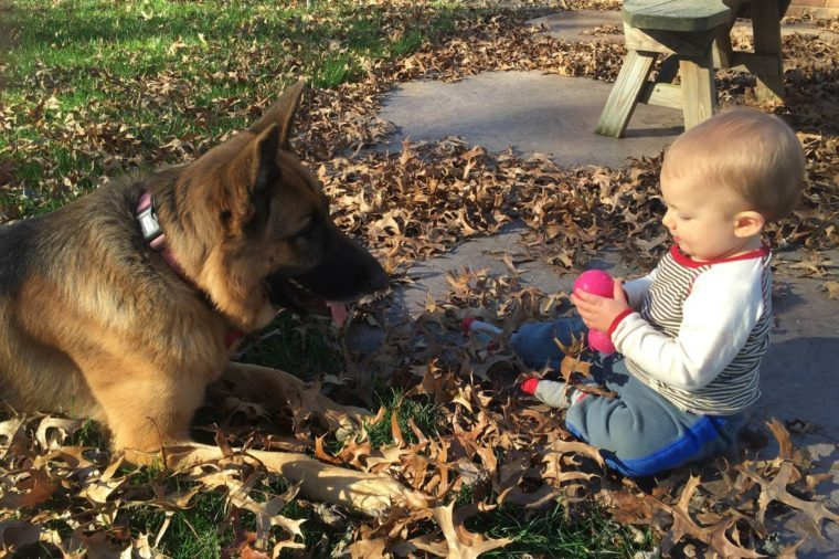 frost's dog and baby