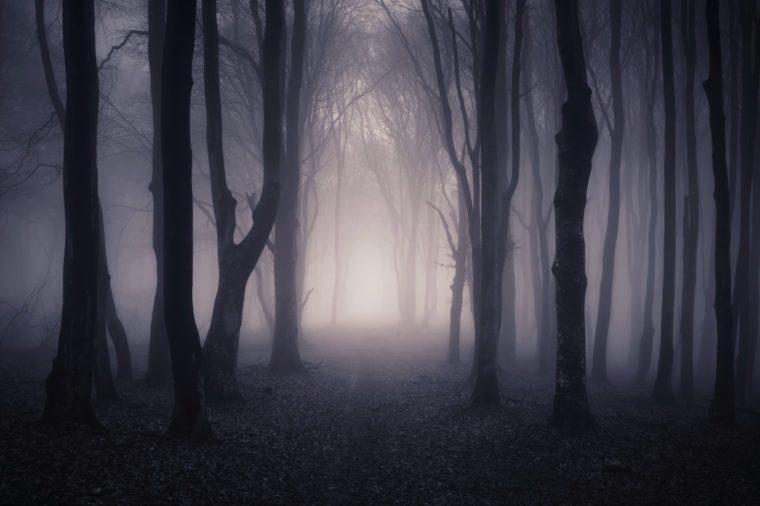 path through a dark forest at night