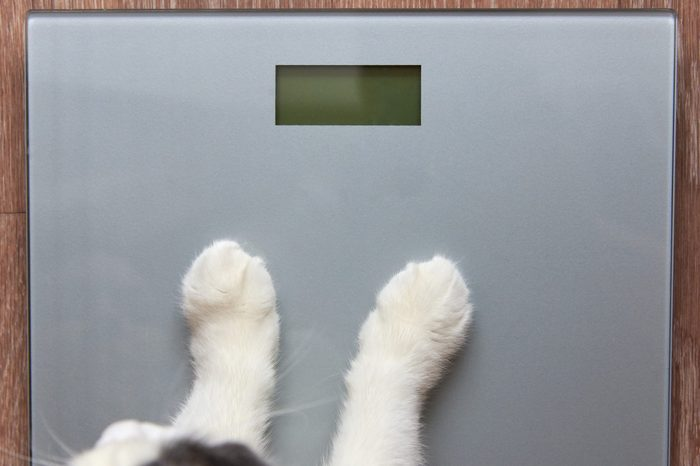 Photo of paws of a cat stand on measuring scales, close-up