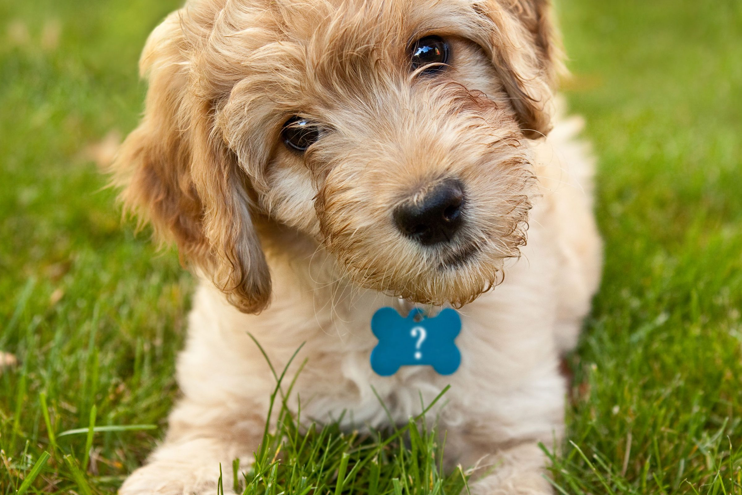 The Most Popular Puppy Names Of 2020 Reader S Digest