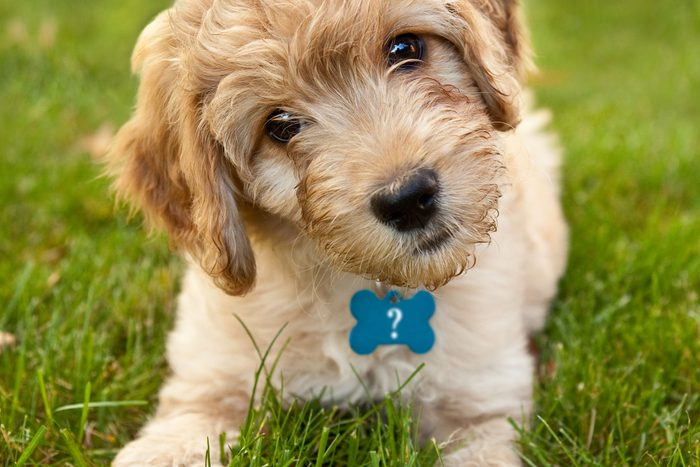 Puppy with question marks on name tag