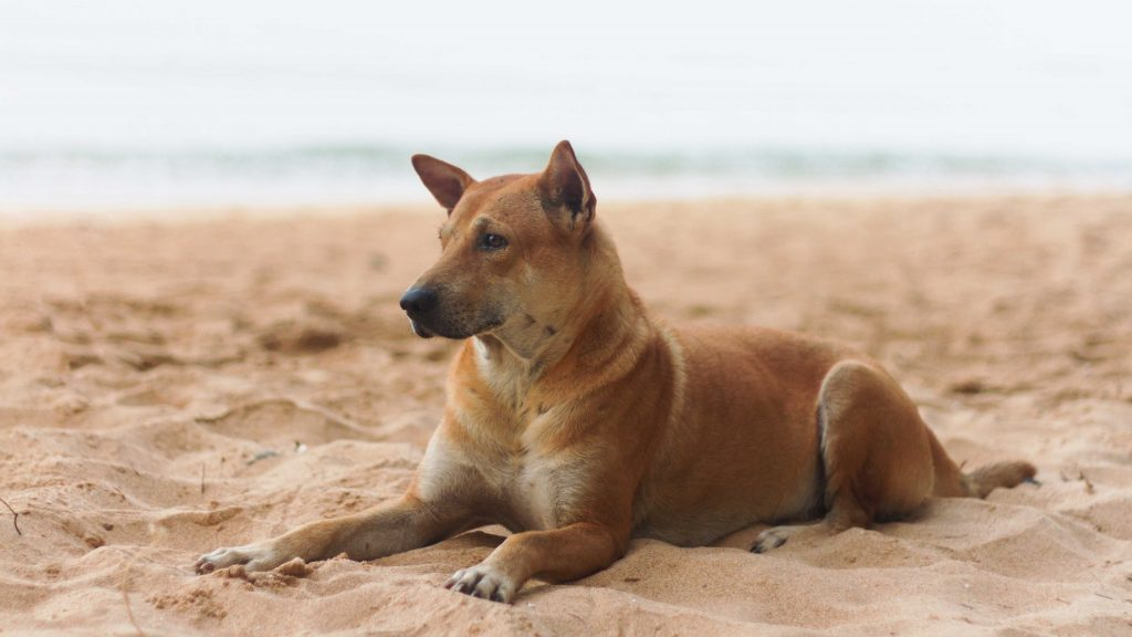 Does Your Dog Need Sunscreen?