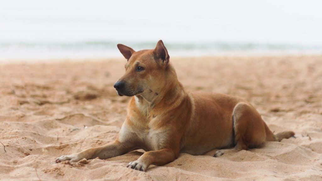 do dogs need sunscreen