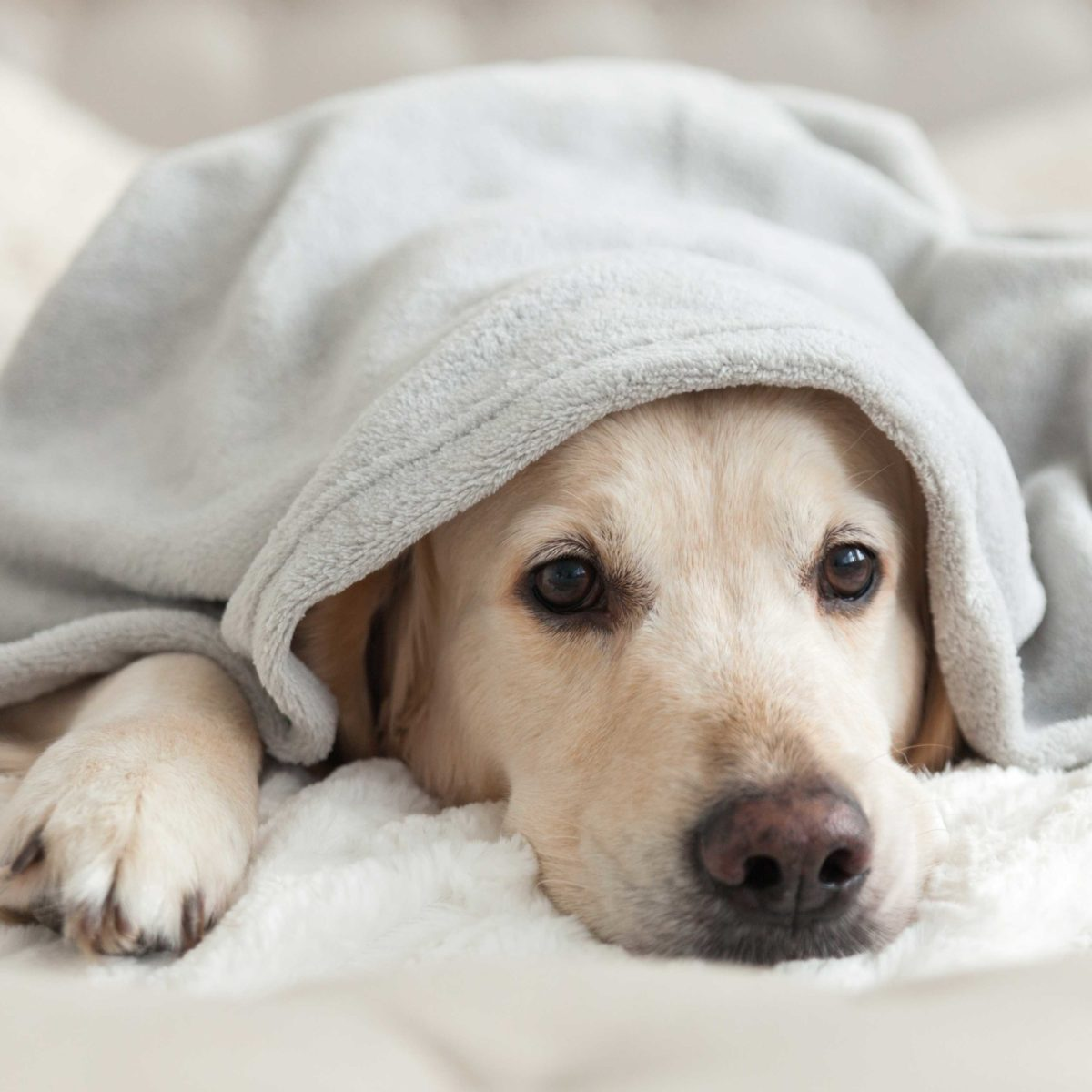 6 Dog Seizure Symptoms to Watch For