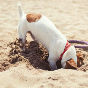 How to Stop a Dog from Digging, According to Dog Trainers