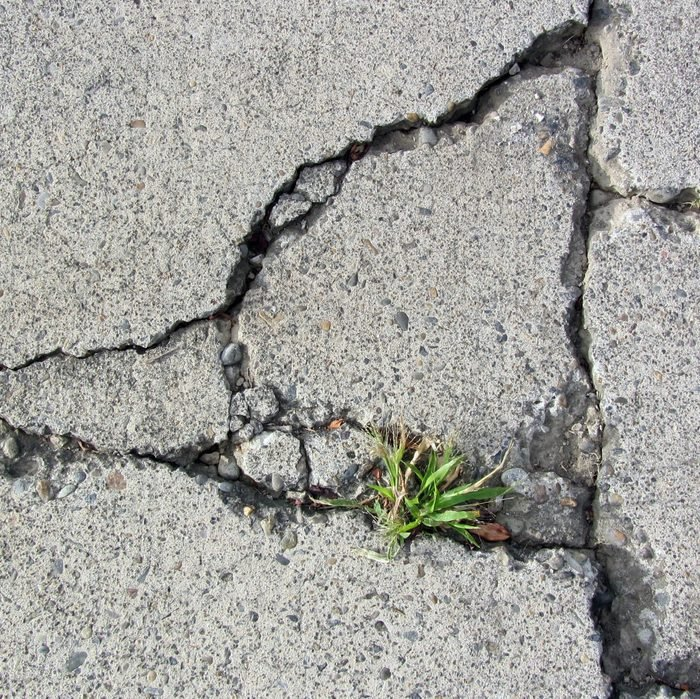 Crack in concrete with weed growing