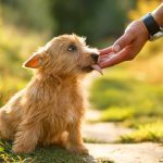 What Does It Mean When a Dog Licks You?