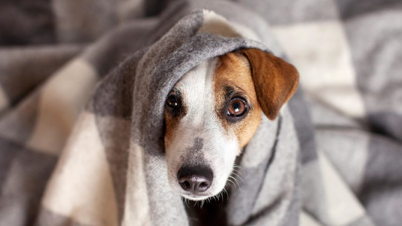 How to Know if Your Pet Has Food Poisoning | Reader's Digest