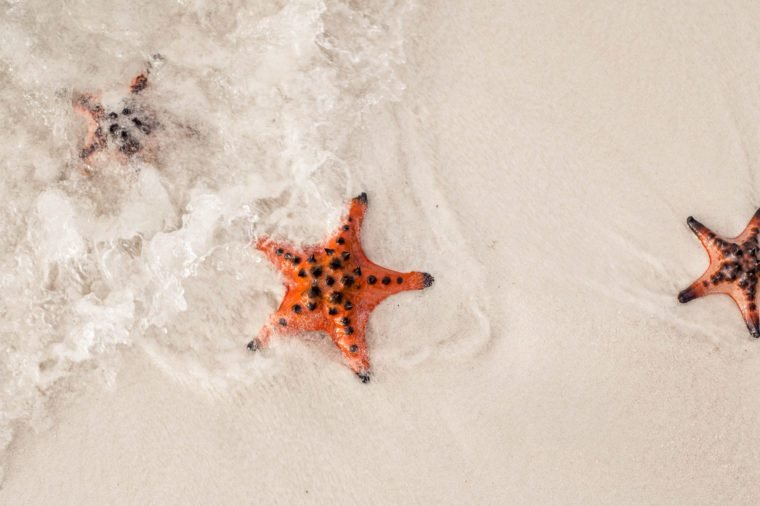 Amazing colorful starfishes close up on the white sandy beach. Beautiful red starfish in crystal clear ocean water, travel concept on tropical starfish beach, Phu Quoc, Vietnam.