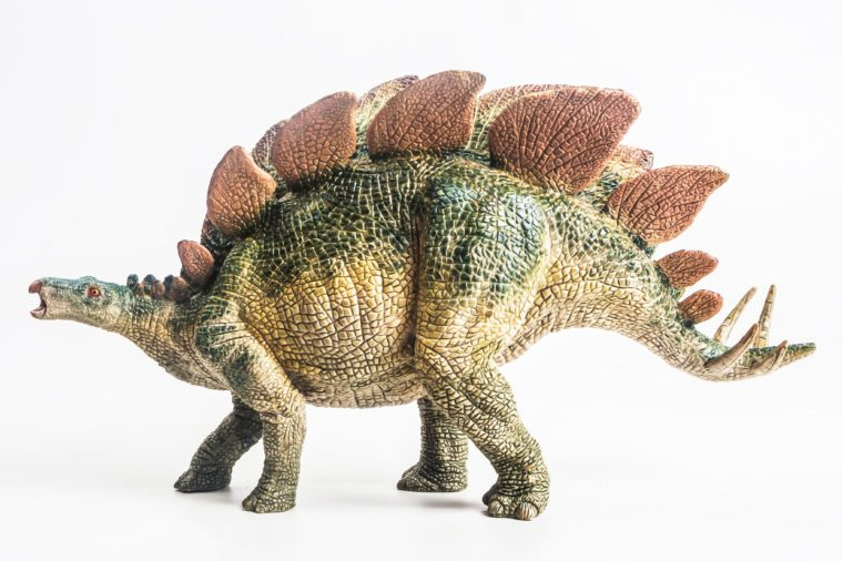 dinosaur , Stegosaurus on white background .